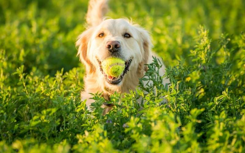 Your Dog And You: Tips And Advice